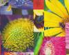 Úplet fototisk květy, š. 160cm