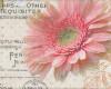Fototisk, Růže, Gerbery, š. 140cm