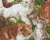 Kočičky, š. 110cm